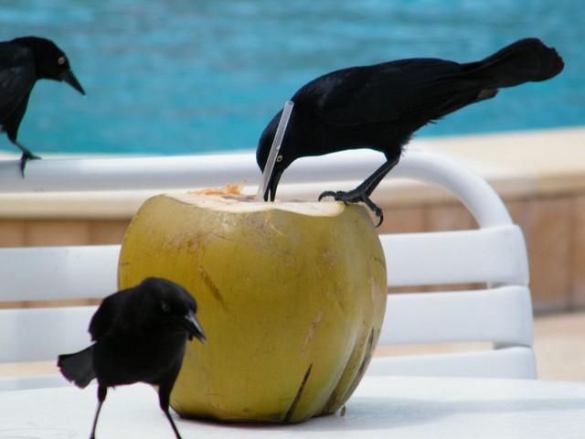5 cibi per avere il ventre piatto acqua di cocco