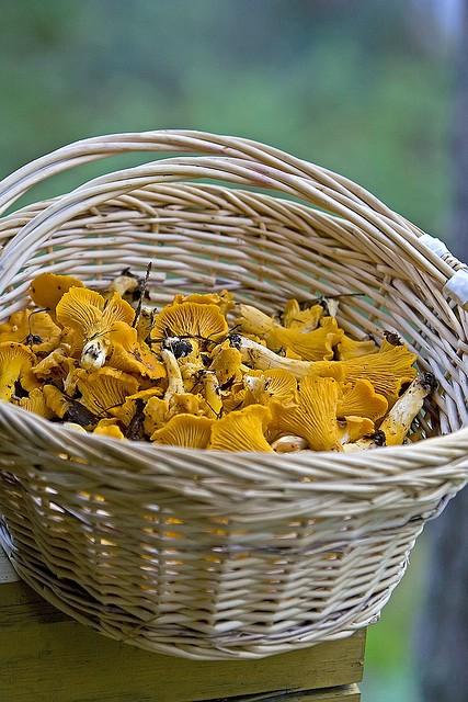 risotto funghi finferli e salsiccia