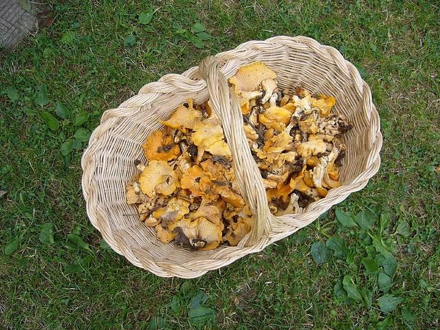 i funghi fanno bene