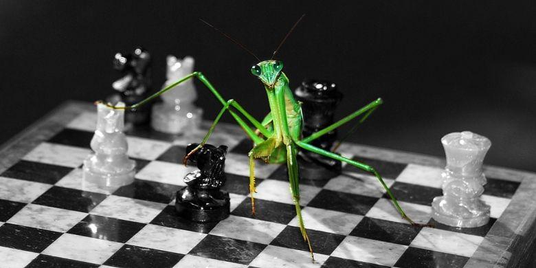 regole-perdere-scacchi