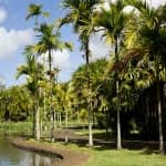 Parco botanico sull'isola di Mauritius