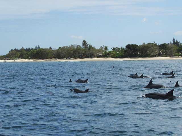 Delfini nell'oceano a Mauritius