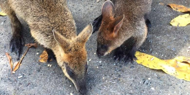 isole più belle del mondo Kangaroo Island