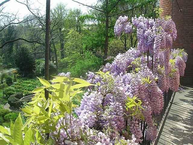 posti più romantici Milano Orto botanico di Brera