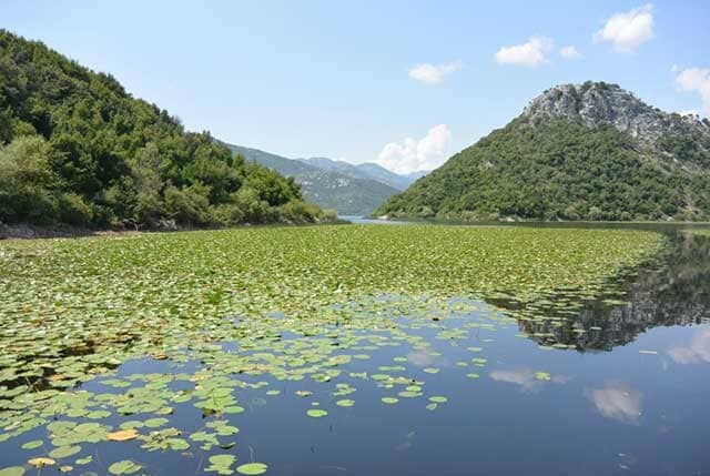 viaggio in Montenegro lago di Skadar