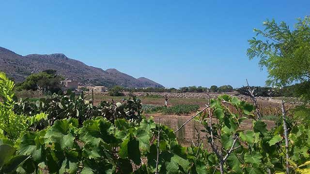 Favignana vitigno Favinia la Muciara